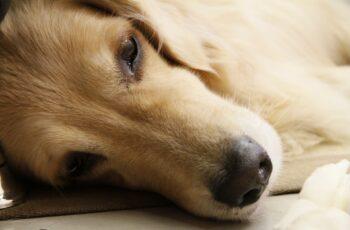 sad homeless dog