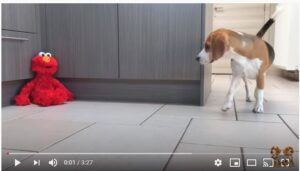 puppy elmo prank