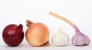 onion garlic dogs shouldnt eat