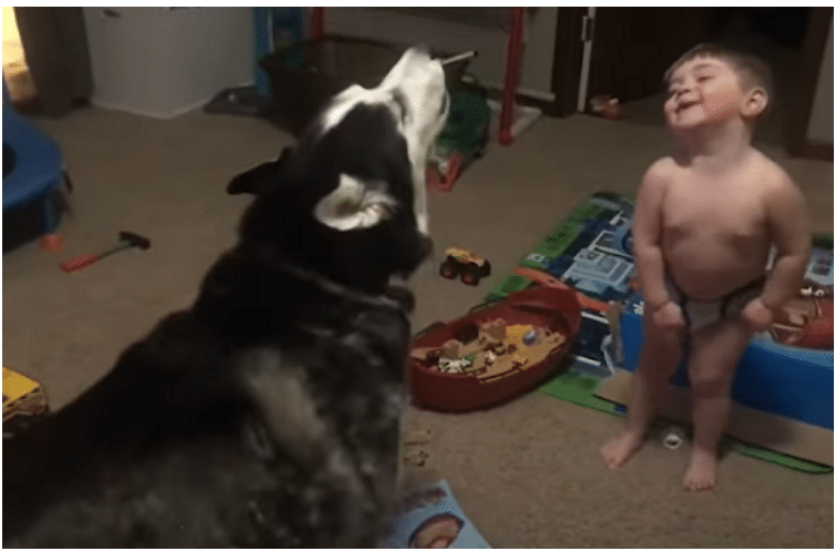 Mom Captures Pup And Toddler's Adorable Howling Session gma