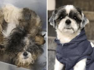 abandoned shelter dog transformations 3
