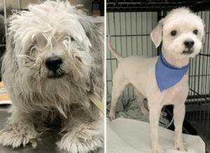 abandoned shelter dog transformations 2