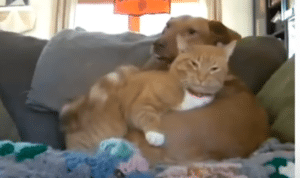 cat cuddles dog with separation anxiety 3