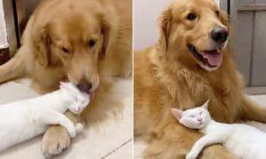 Dog cat cuddle sweet