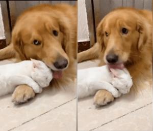 cat dog friend cuddle