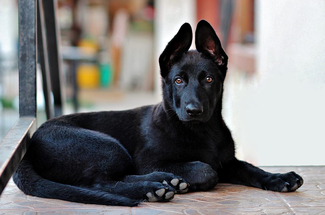 dax the dog keeping communities safe