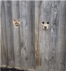 dogs peephole fence