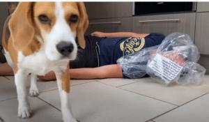 Marie the beagle vs chucky, chucky kills owner