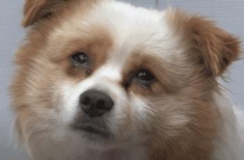 sad terminal abandoned dog